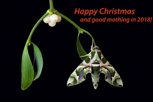 Happy Christmas and a Mothy New Year