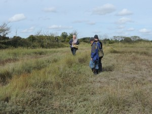 Searching the saltmarsh